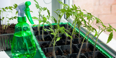 Полезные приспособления для выращивания рассады