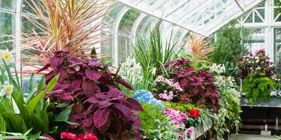 Зимний сад: правила обустройства