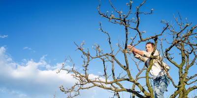 Урок 10. Обрезка основных плодовых и ягодных культур
