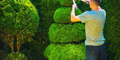 Урок 9. Обрезка декоративных деревьев и кустарников