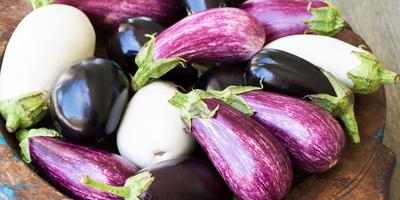 Баклажаны: сорта для заготовок от агрофирмы ПОИСК