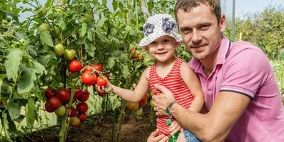 """Стартует конкурс """"Лучший урожай томатов от Партнера"""""""
