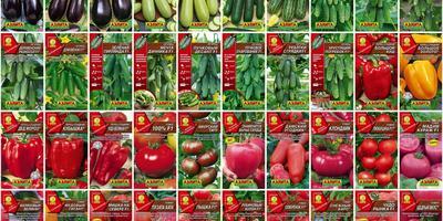 Объявляем набор группы тестирования семян овощей от Агрофирмы АЭЛИТА!