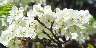 8 марта с запахом мимоз...
