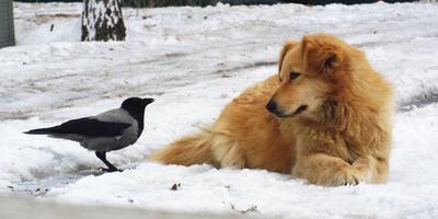 Гром - наш друг и верный пес!