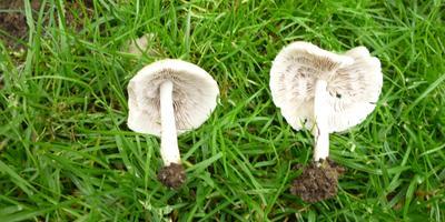 Что за грибы и как от них избавиться?