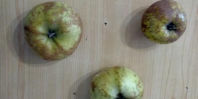 Подскажите, что с яблоками?