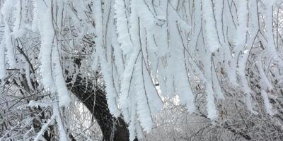 Прогулка по зимнему лесу 1 января