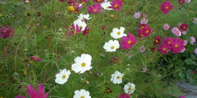 Цветы для вдохновения (лирическое отступление)