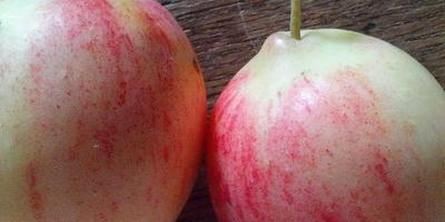 Подскажите сорт яблок