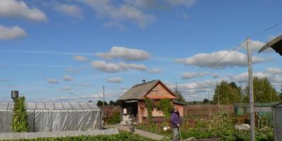 О фасоли, возрасте и костромской деревне