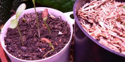 Помогите определить растение по семенам