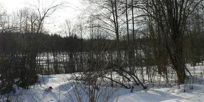 Март - месяц зимний. Весенние картинки леса