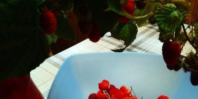 Ремонтантная малина. Как сорта подбирала
