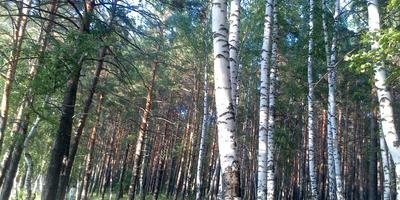 Люблю бродить в лесу в жару...