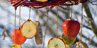 Покормите птиц зимой, или 6 креативных кормушек своими руками