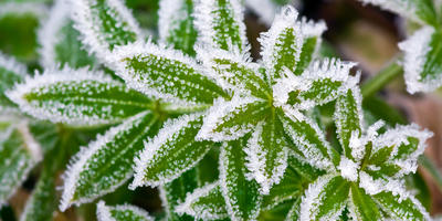 Как защитить растения от возвратных заморозков