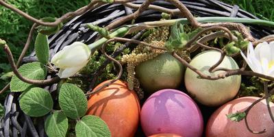 Раскрашенные природой: натуральные красители для пасхальных яиц