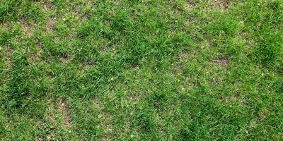 Молодо-зелено: газонные проблемы и их решение