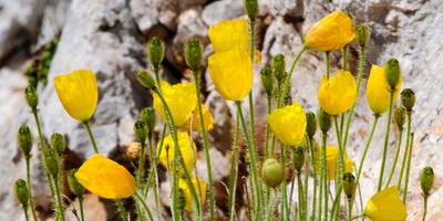"""Растения и стили: """"шпаргалка"""" для начинающих ландшафтных дизайнеров"""