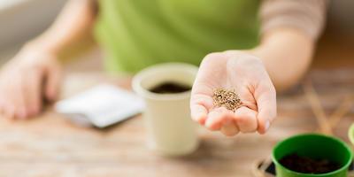 5 правил сбора и хранения семян