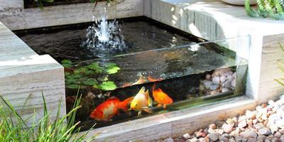 Садовый аквариум на даче