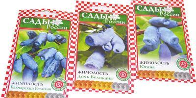 Жимолость – гордость «Садов России»