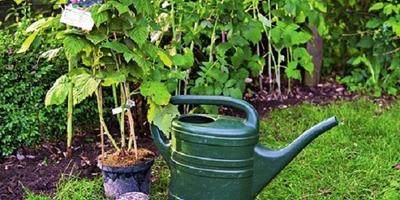 Яркие ягоды в саду: выбираем сорта малины и ежевики