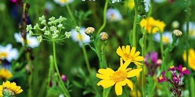 15 идей для обновления сада