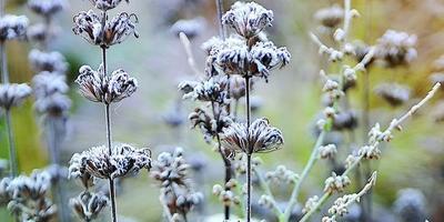 Стойкие солдатики: 10 многолетников для зимнего цветника