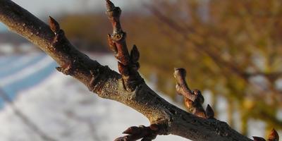 Сезонные работы в саду и огороде: четвертая неделя февраля