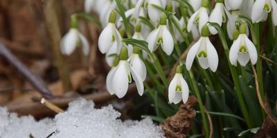 Сезонные работы в саду и огороде: четвертая неделя марта