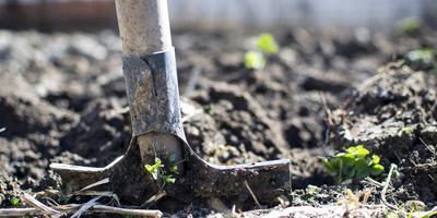 Сезонные работы в саду и огороде: вторая неделя апреля