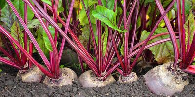 Сезонные работы в саду и огороде: вторая неделя сентября