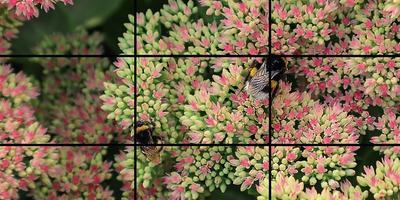 Как построить кадр, или Основы композиции в фотографии