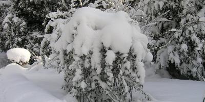 Сезонные работы в саду и огороде: вторая неделя января