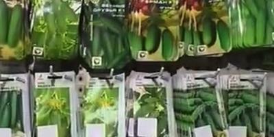 Как выбрать лучшие семена?