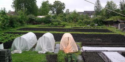 Маленькая история сада, который я начинаю любить все больше и больше