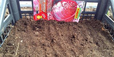 """Краснокочанная капуста """"Рубин МС"""" - кладезь витаминов"""