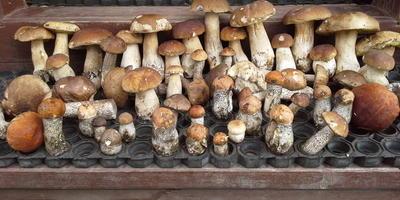Жульены из белых грибов