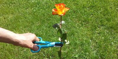 Ножницы для роз GARDENA