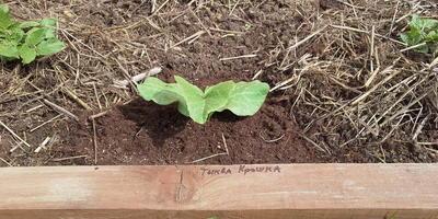 Могут муравьи навредить картофелю, стоит с ними бороться? Какую химию можно использовать от сорняков, чтобы не пострадали овощи?