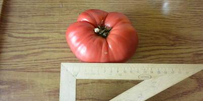 Любимый помидор