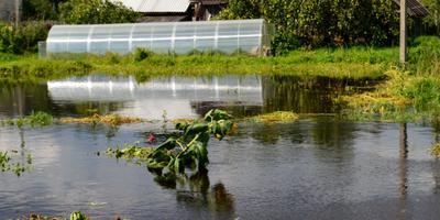 У нас наводнение. Что делать с урожаем?
