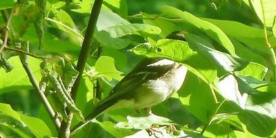 День Орнитолога. Птички на ваших участках