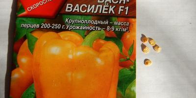Перец Вася-Василек F1. Тест на всхожесть