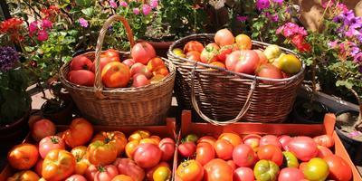Люблю помидоры разные: черные, желтые, красные...