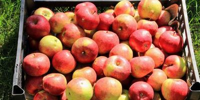 Фрукты в нашем саду или витаминный заряд против осенней хандры