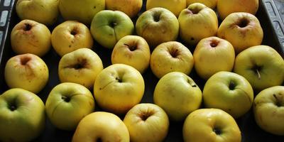 Пастила яблочная, белёвская