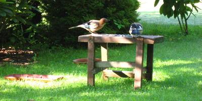 Кто живёт в нашем саду? Часть 1